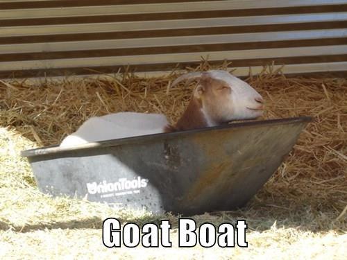 animals goat captions funny