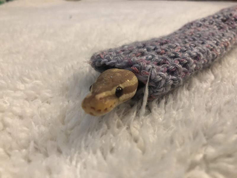 cute snakes in sweaters
