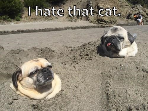 animals buried dogs pugs sand mischief Cats trick - 8478497024
