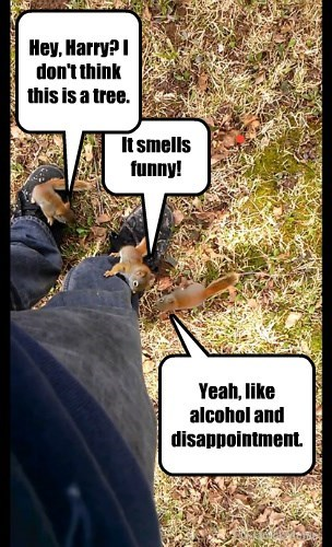 captions,squirrels,funny