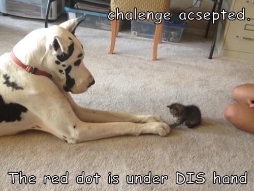 animals red dot great dane kyoot kitteth - 8478785792