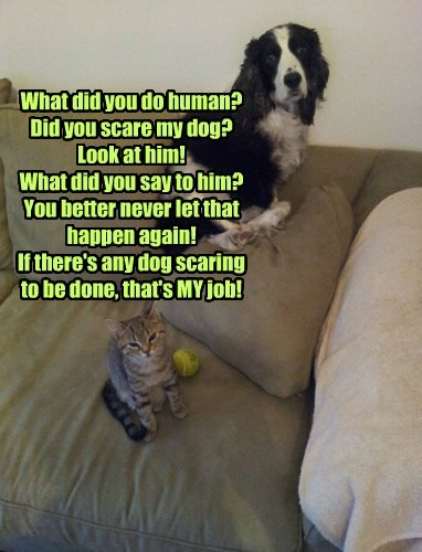 What did you do human? Did you scare my dog? Look at him! What did you say to him? You better never let that happen again! If there's any dog scaring to be done, that's MY job!