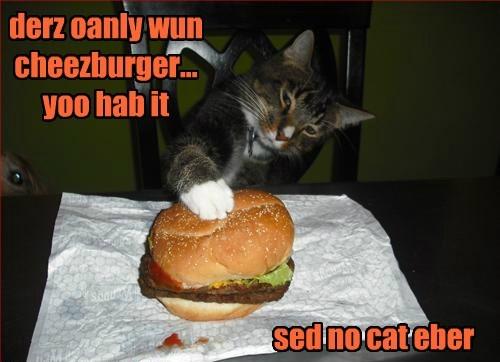Cheezburger Image 8479050496