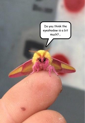 bugs captions cute - 8479182080