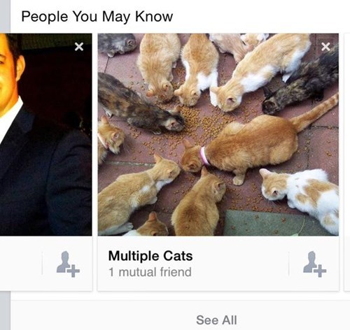 funny-facebook-pic-suggestion-friends-cats