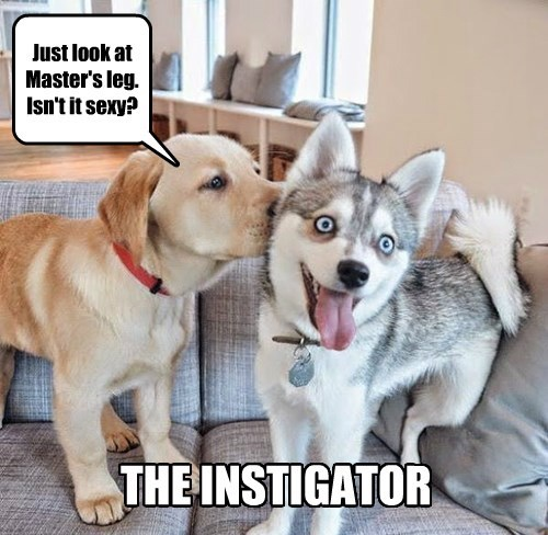 instigator dogs puppy do it - 8479587328
