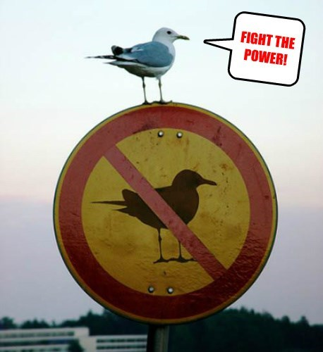 birds rebel fight seagull