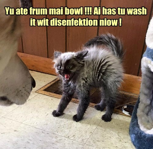 Yu ate frum mai bowl !!! Ai has tu wash it wit disenfektion niow !