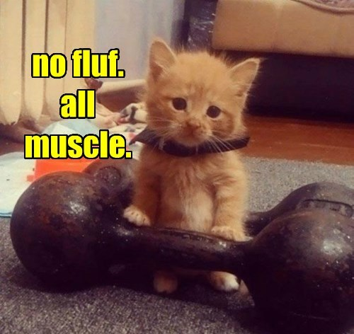 no fluf. all muscle.