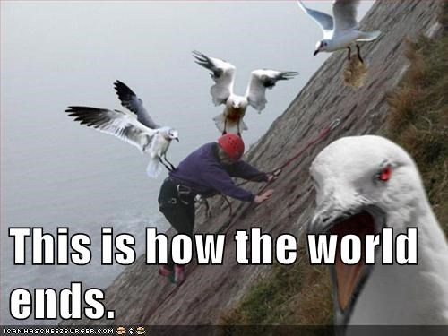 birds,attack,apocalypse,The End,seagull