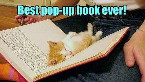 kitten best seller book Cats squee