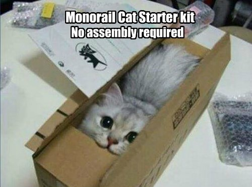 box monorail cat if i fits i sits Cats