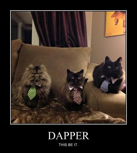 tie dapper classy Cats - 8479809536