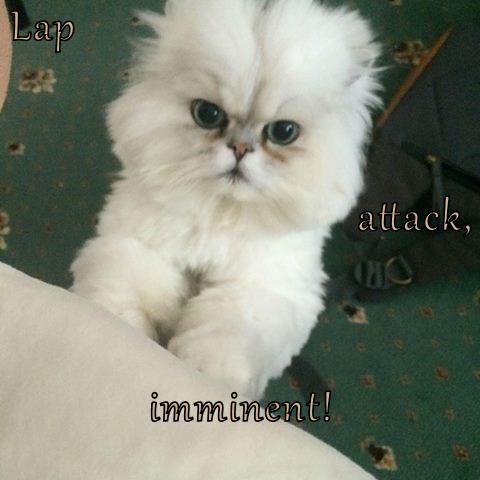 Lap attack, imminent!