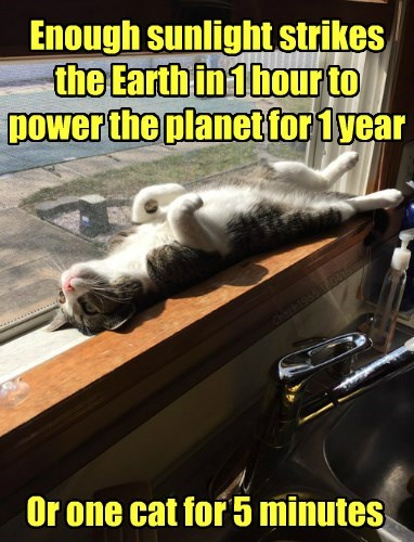 Enough sunlight strikes the Earth in 1 hour to power the planet for 1 year Or one cat for 5 minutes Chech1965 180415