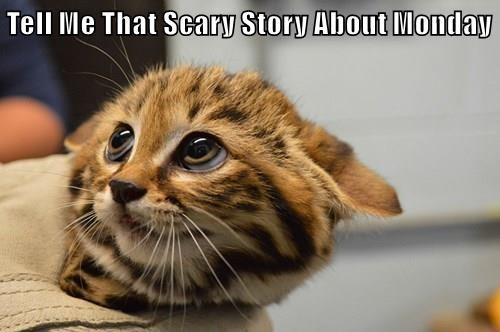 animals scary sunday sleep story Cats monday - 8480547328