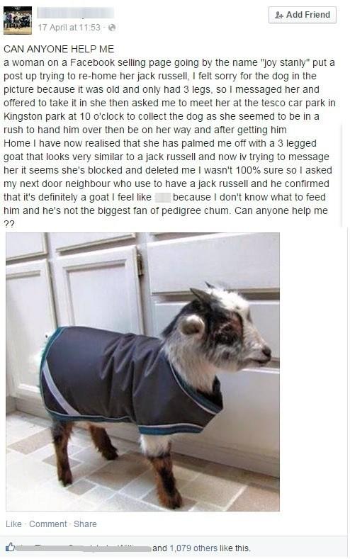goat pets kid prank failbook - 8480574976