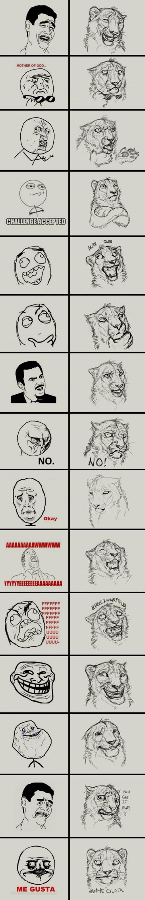 meme mas leon