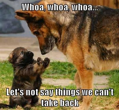 animals dogs captions funny - 8480755968