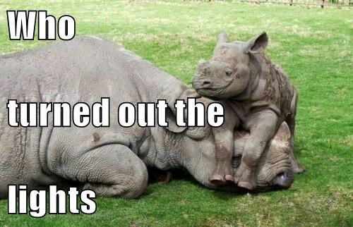 animals rhinoceros captions cute - 8480986368