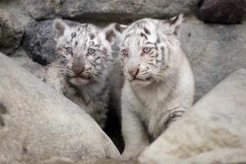 curious-cubs-make-their-squeeful-debut-at-a-tokyo-zoo