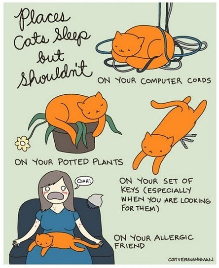 funny-web-comics-places-cats-sleep-where-they-shouldnt