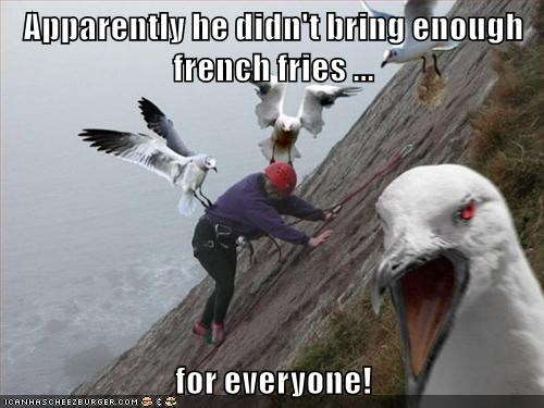 animals birds captions funny - 8481048320