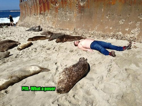 captions seals funny - 8481194240