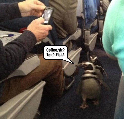penguins,captions,funny