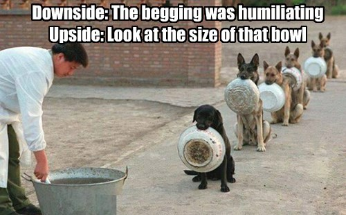 Downside: The begging was humiliating Upside: Look at the size of that bowl