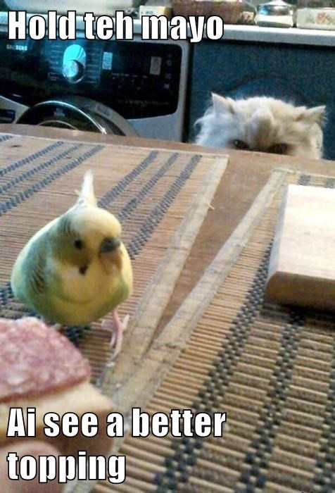 animals condiment birds attack lunch noms Cats - 8481299200