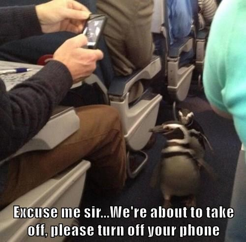 animals excuse me phone penguin - 8481312768