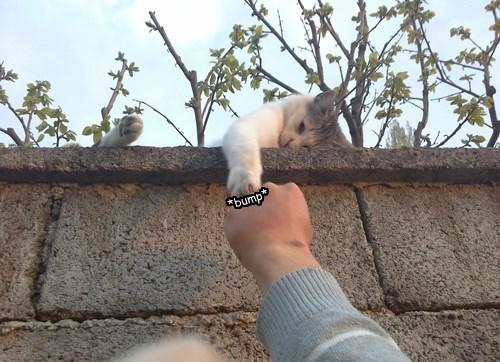BFFs boop high five fist bump Cats