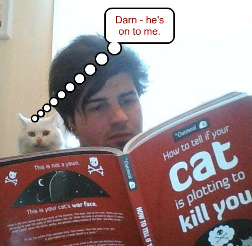 Cats darn murder plot kill plan - 8482059520