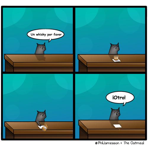 gato en bar