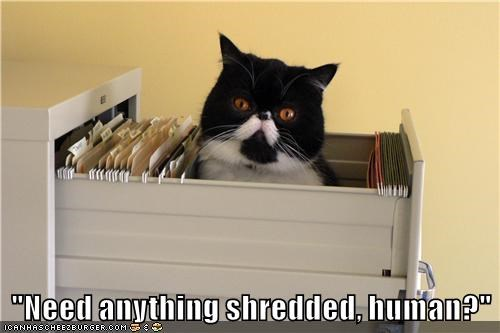animals job skill Office shred Cats