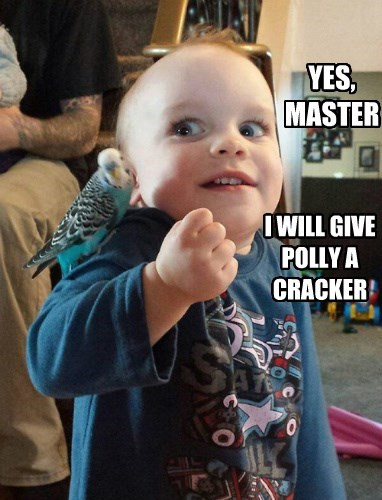 YES, MASTER I WILL GIVE POLLY A CRACKER