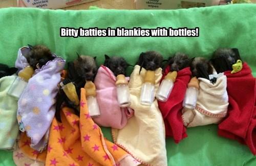 bats,cute,bottles