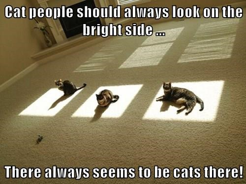 animals optimist positive Cats - 8482875648