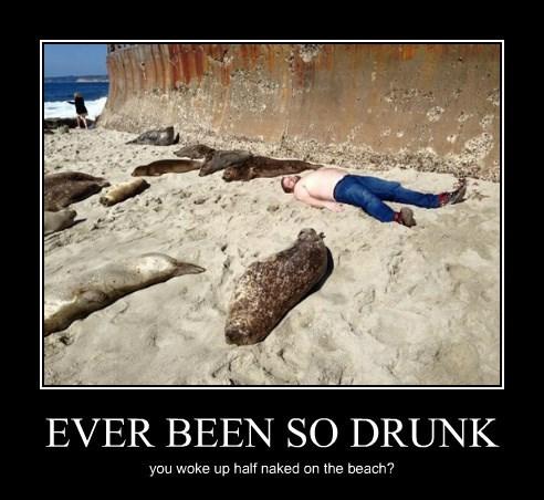 sea lions beach - 8483486208