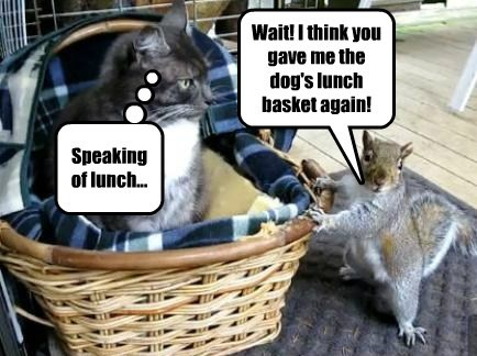 squirrel,lunch,Cats