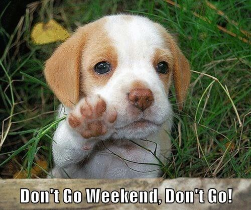 Don't Go Weekend, Don't Go!