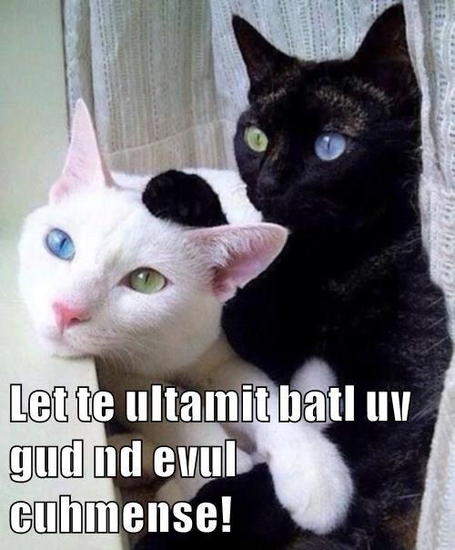animals - 8483897856
