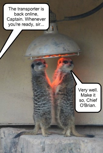 Boldly Warming Where No Meerkats Have Warmed Before