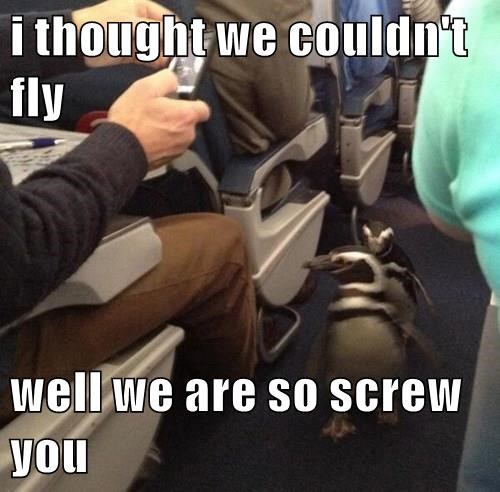 planes,penguins,puns,flying