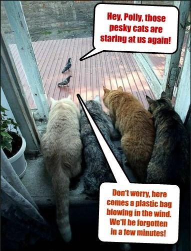 captions Cats funny - 8484069120