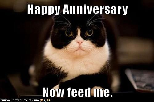 Happy Anniversary Now feed me  - Lolcats - lol | cat memes