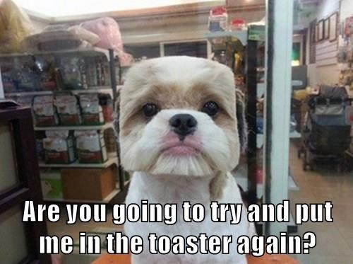 dogs,Square,toaster