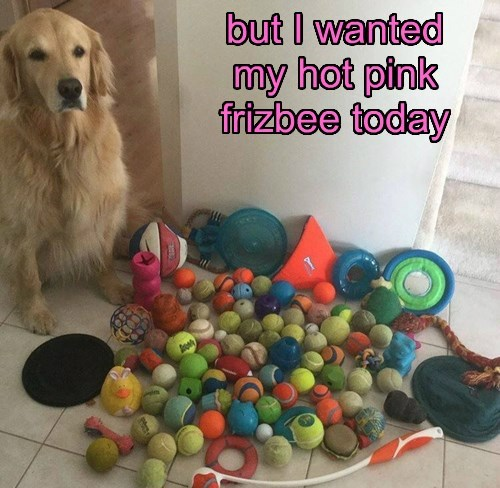 dogs,toys,golden retriever