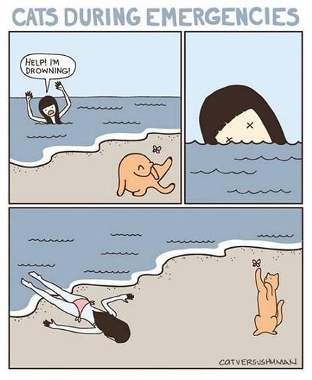 funny-web-comics-cats-during-emergencies